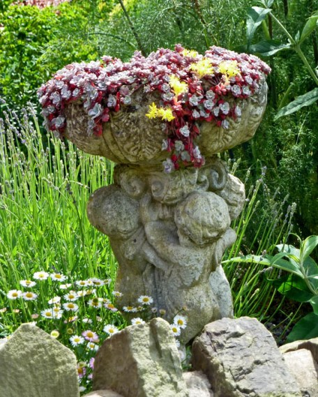 Stone urn containing sempervivum