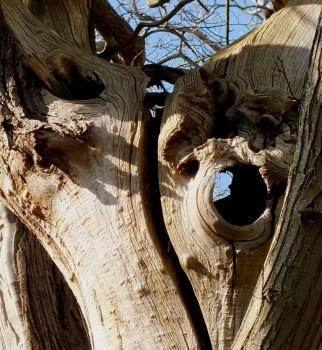 winter tree (1)