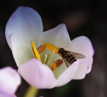 insects-(4)