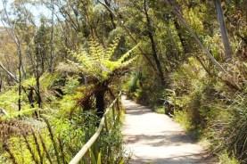 A winding path