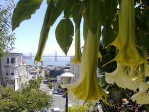 Sur les pas de Mme Madrigal, San Francisco (c) éa marzarte