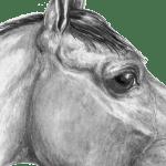 The Equine Eye Small Farmer S Journal