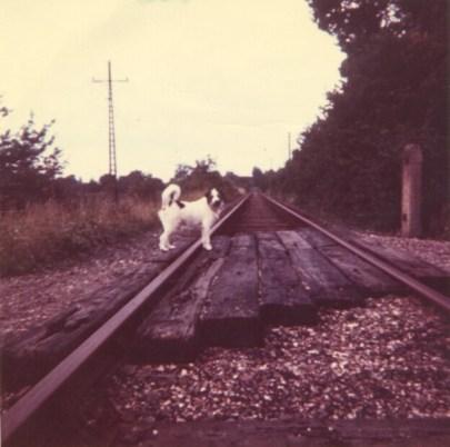 Near Butterwick Siding footpath crossing 2 1963