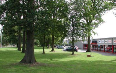 Butterwick Wood