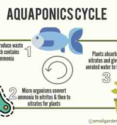 aquaponics cycle diagram [ 1268 x 921 Pixel ]