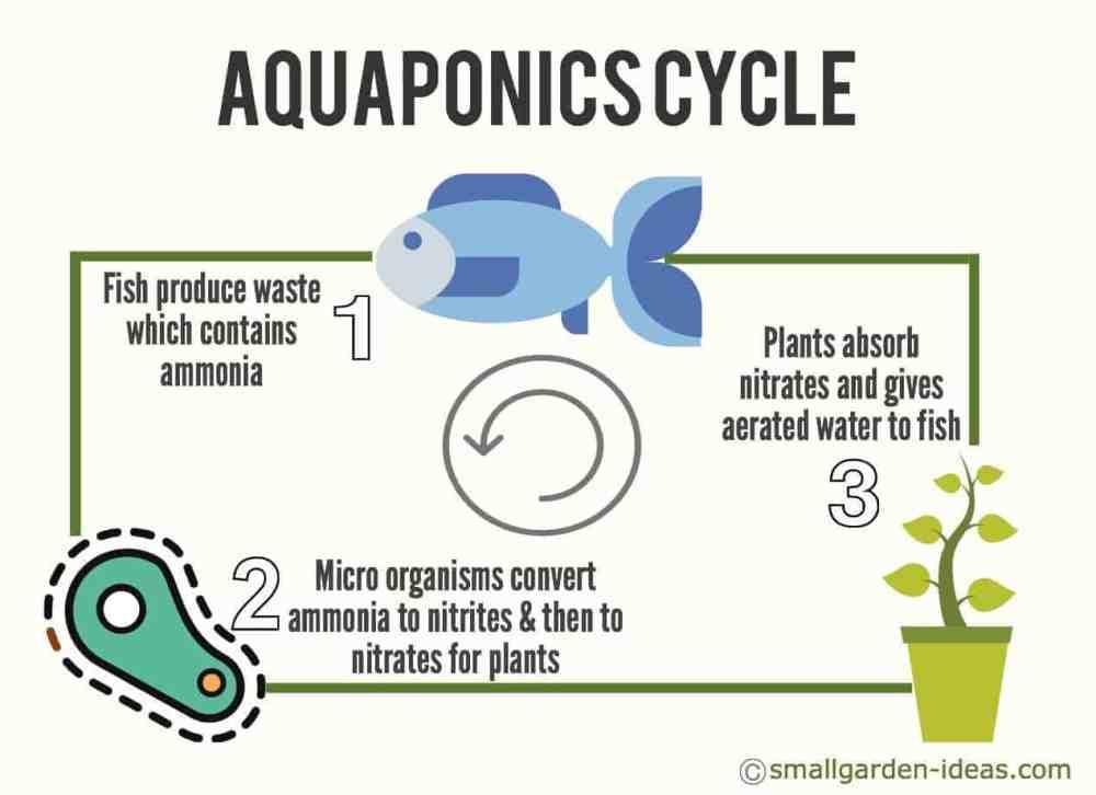medium resolution of aquaponics cycle diagram