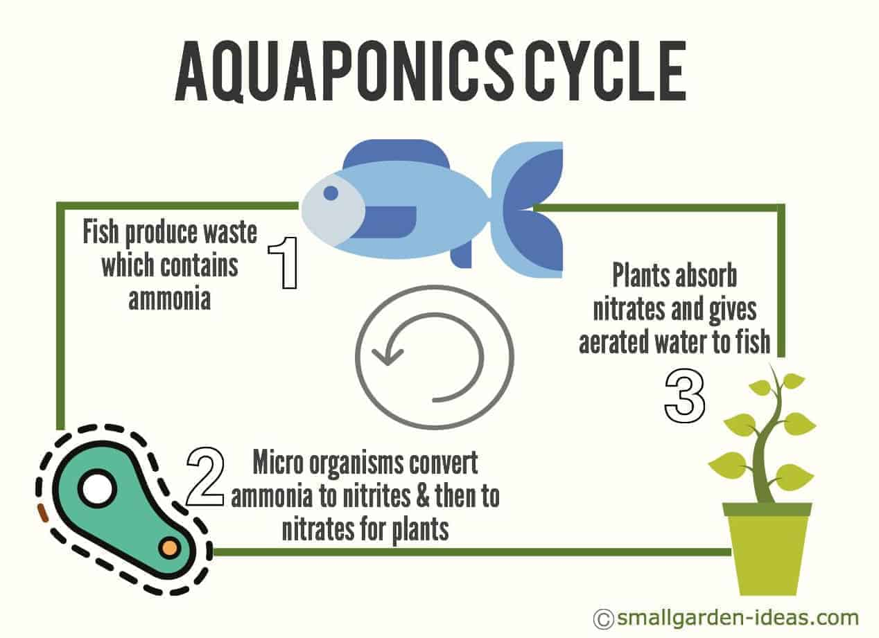 hight resolution of aquaponics cycle diagram