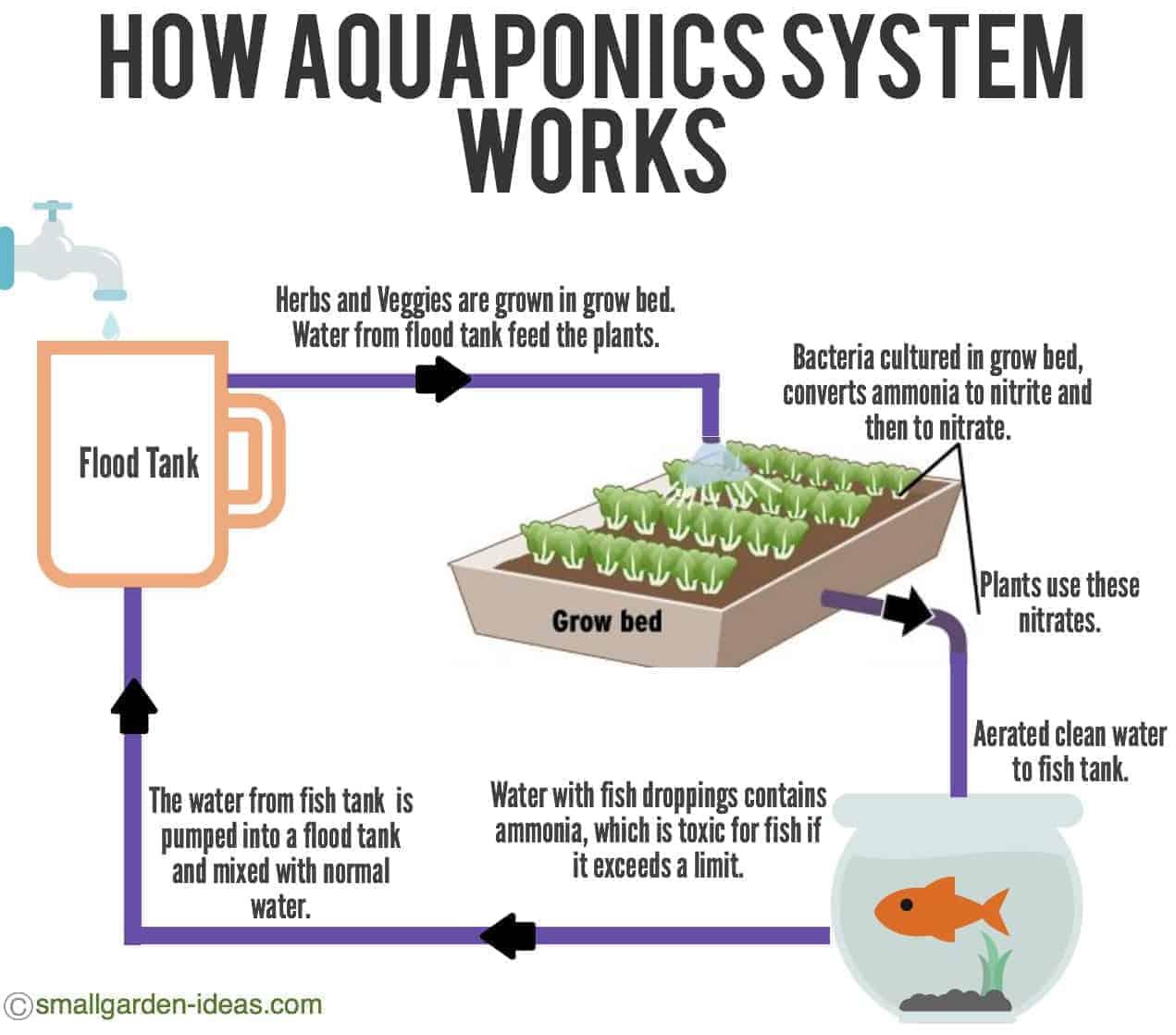 Image result for aquaponics set up diagram