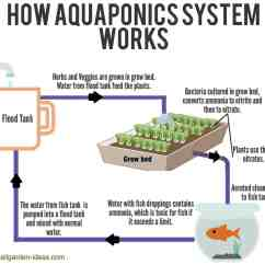Pond Ecosystem Diagram Mazda 6 Wiring Gg Aquaponics System With Fish Free