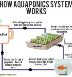how aquaponic system works [ 1271 x 1118 Pixel ]