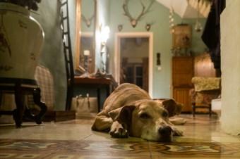 下半身麻痺の犬が歩けるように! アニマルボディートーク症例
