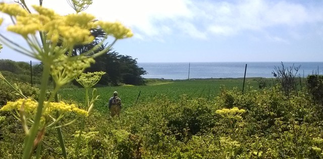 ocean-view-with-farm-worker-montara-ca