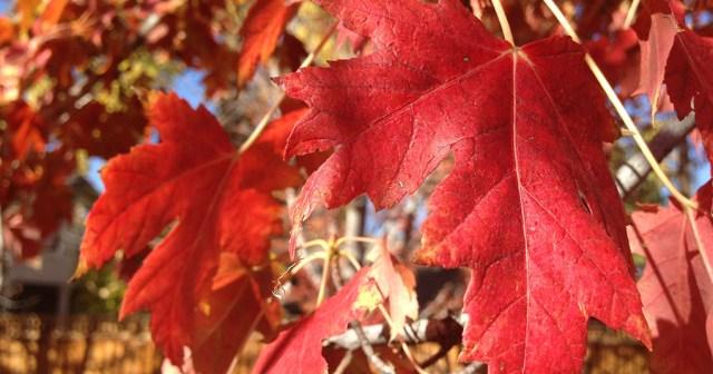 Fall Foliage Denver CO