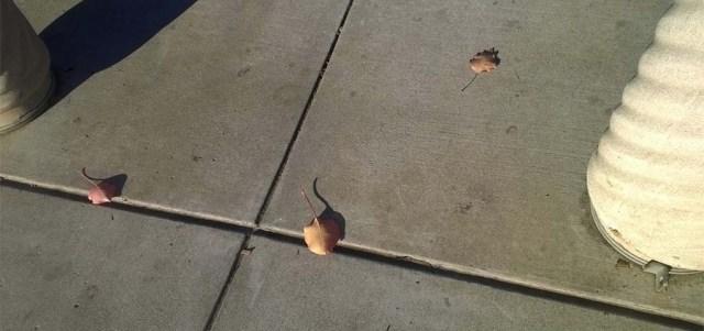 Fallen Leaves on Sidewalk