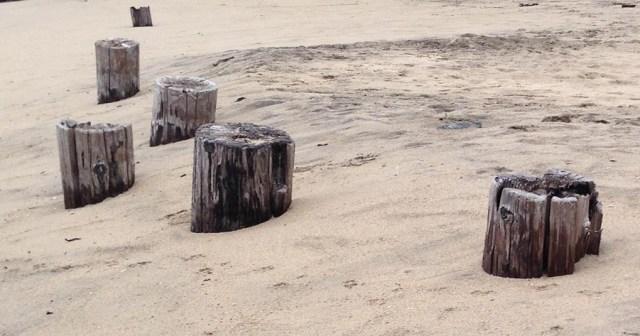 Posts Buried at the Beach Miramar CA