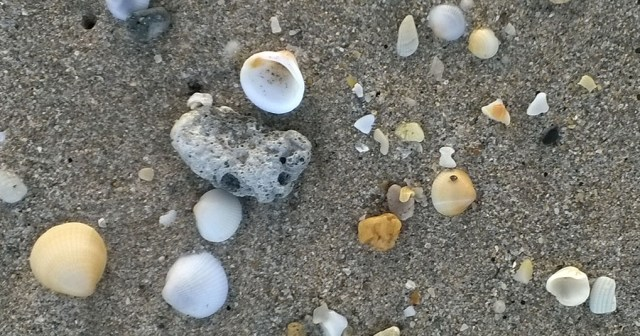 Seashells at Sunset West Palm Beach Florida