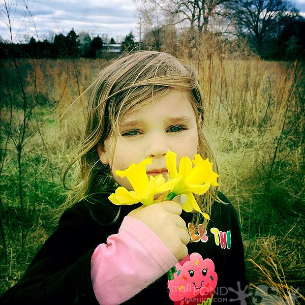mar_daffodils2