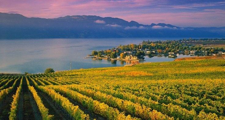 la vista del lago dalle colline piene di frutti