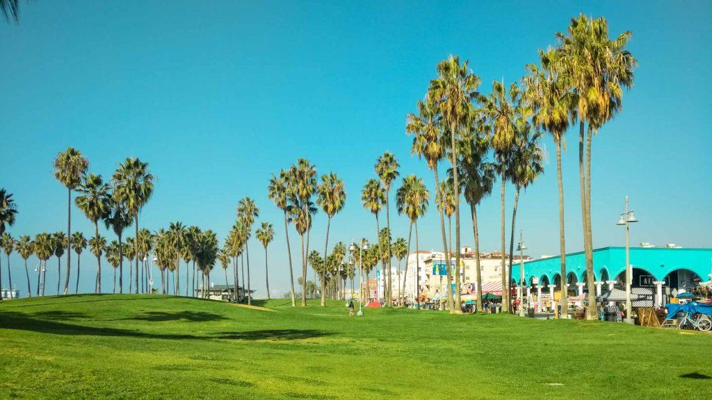 Parco e palme a venice beach