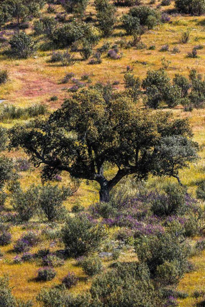 albero e macchia mediterranea ambiente del parco di Mönfrague