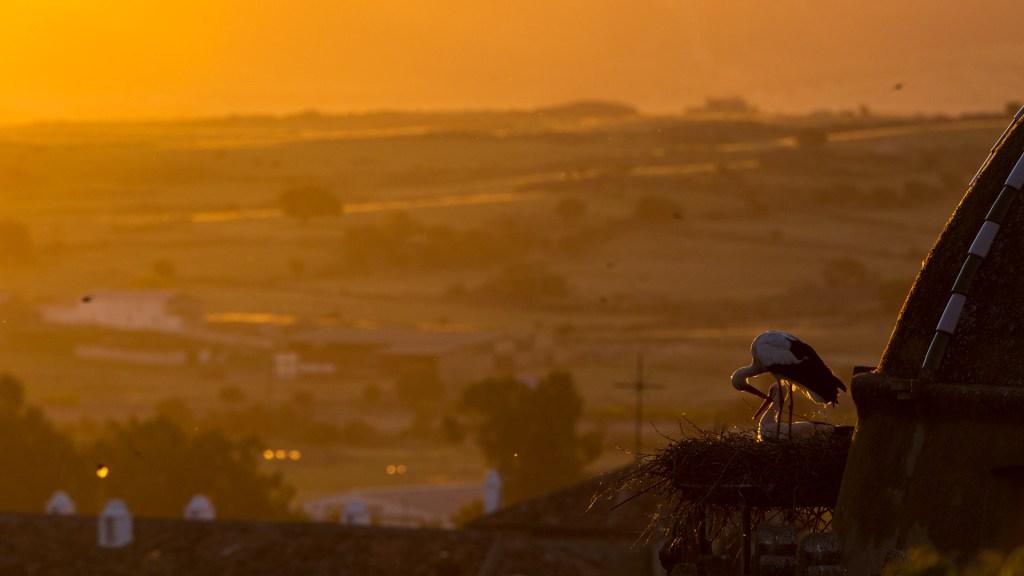 Cicogne nel nido in città all'alba Trujillo Spagna