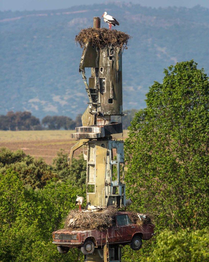 Cicogne nidificanti su opera d'arte a Los Barruecos