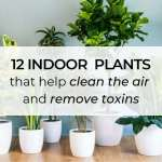12 Indoor Plants That Help Clean The Air And Remove Toxins Small Space Therapy
