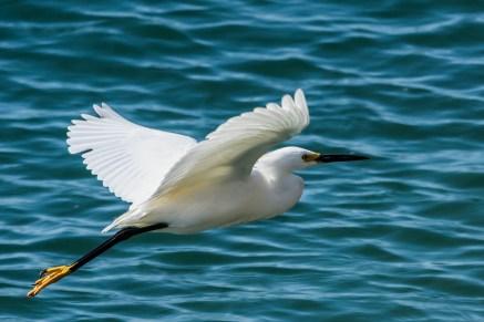 elegant flying