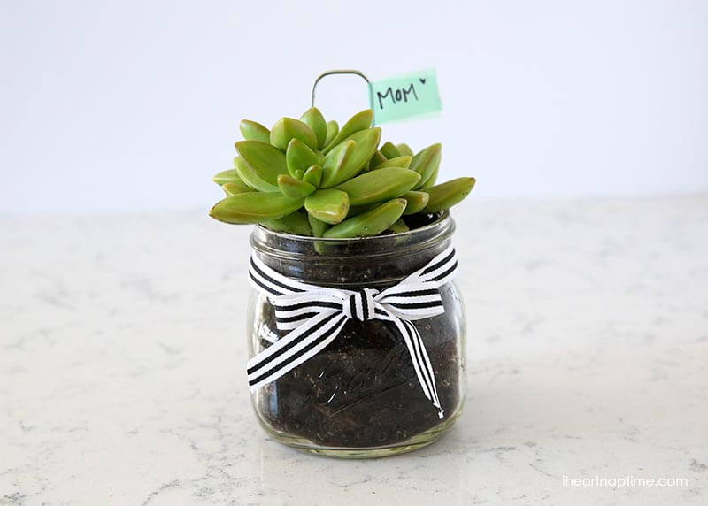 succulents in glass jar with striped ribbon