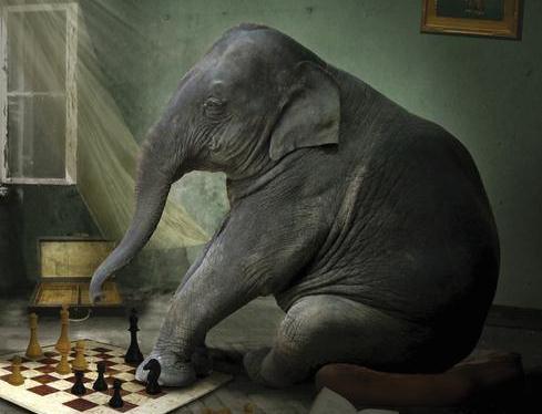 petit joueur d'échecs - Le petit joueur d'échecs - Yoko Ogawa petit joueur echecs couv