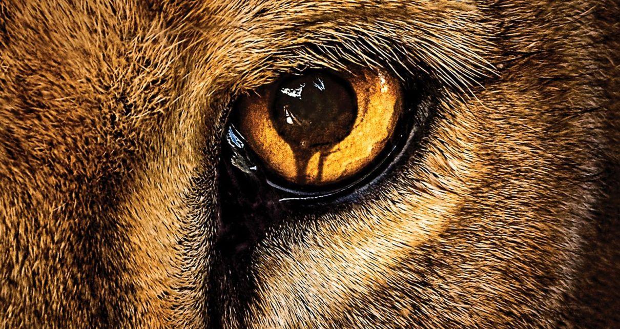 James Patterson - Zoo : le livre qui a inspiré la série TV