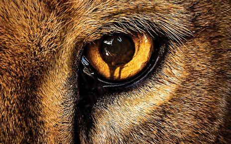 James Patterson - Zoo : le livre qui a inspiré la série TV zoo couv