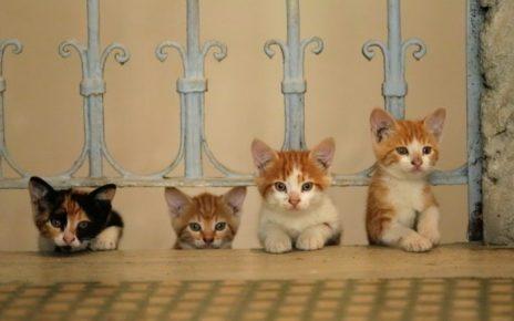 concours - Concours : gagnez 2x2 places pour Kedi des chats et des hommes Kedi Randy Russell Talkhouse chats hommes