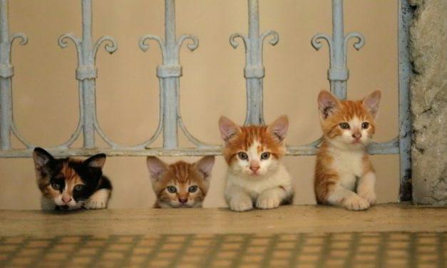 Concours : gagnez 2×2 places pour Kedi des chats et des hommes