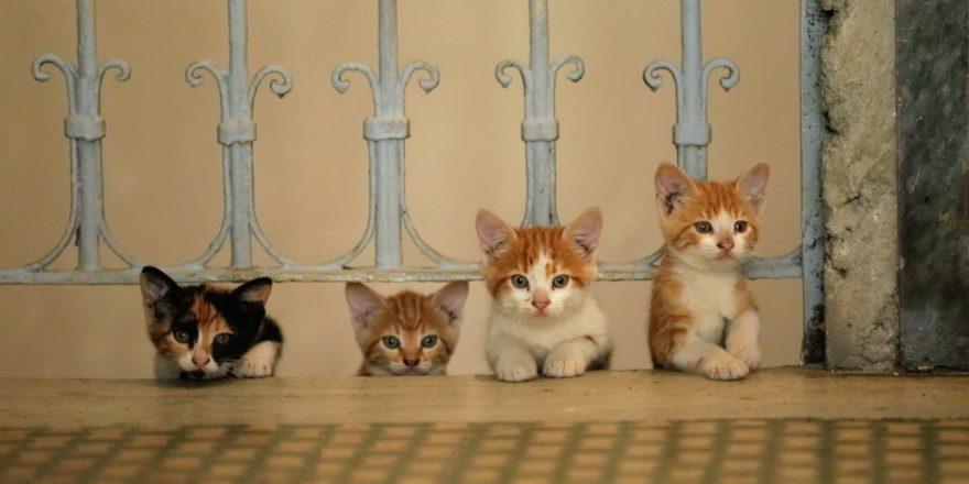 concours - Concours : gagnez 2x2 places pour Kedi des chats et des hommes