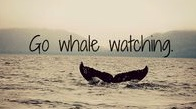 whale watching go
