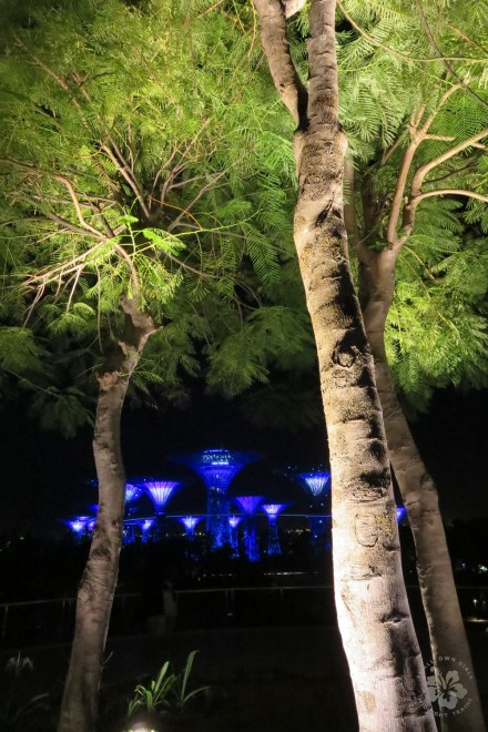 The Supertree Grove, Gardens by the Bay, Singapore