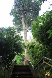 06 Singapore Southern Ridges Trail