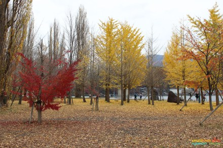SGMT Japan Lake Kawaguchi 18 Lakeside and yellow foliage