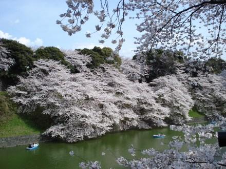 Sakura, Chidorigafuchi moat, Tokyo Imperial Palace (public domain)