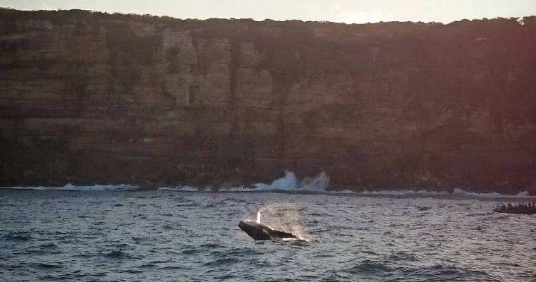 Whale Watching in Sydney, Australia (May to November)