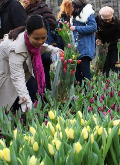 SGMT Amsterdam National Tulip Festival