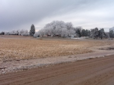 Frosted Farm