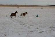 horses following a sled