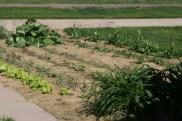 Nebraska Garden