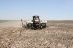 2015 Dryland Corn Planting