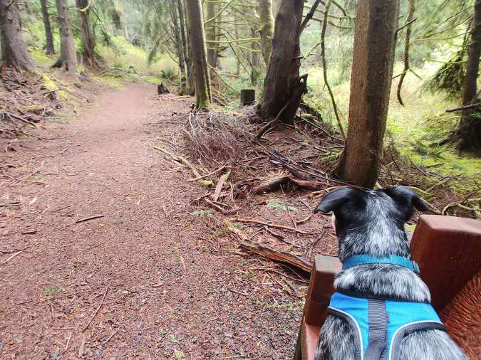 The trails at Agnes Creek Open Space in Lincoln City, Oregon.