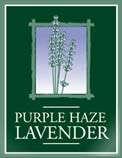 Purple Haze Lavender in Sequim, WAshington