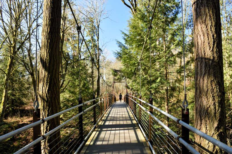 The suspension bridge at the Bellevue Botanical Gardens.