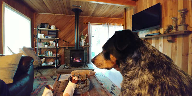 A dog chilling in the living room at Millard's Cabin in Packwood, Washington.